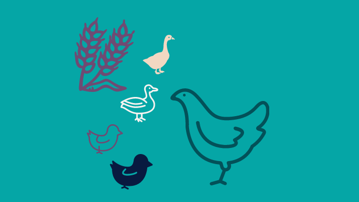 Wheat, goose, duck, two chicks and a hen